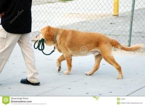 independent-dog-41202