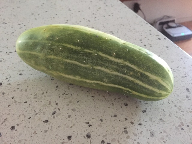 My only cucumber!