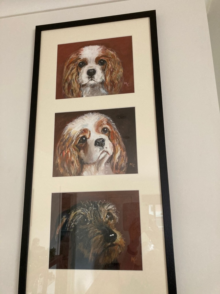 Portraits of the 3 dogs.